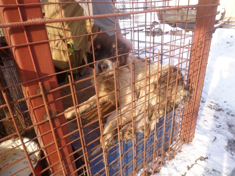 Kalle - früher im öffentlichen Tierheim