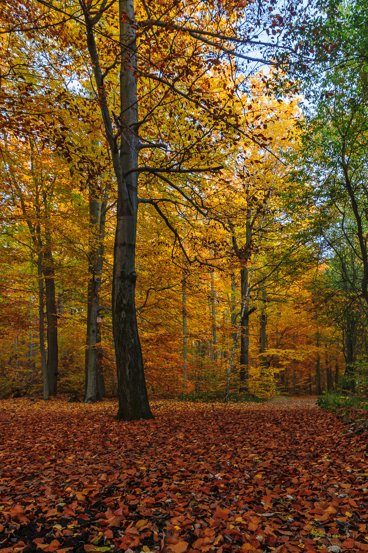 Herbstlicher Zeisigwald Chemnitz