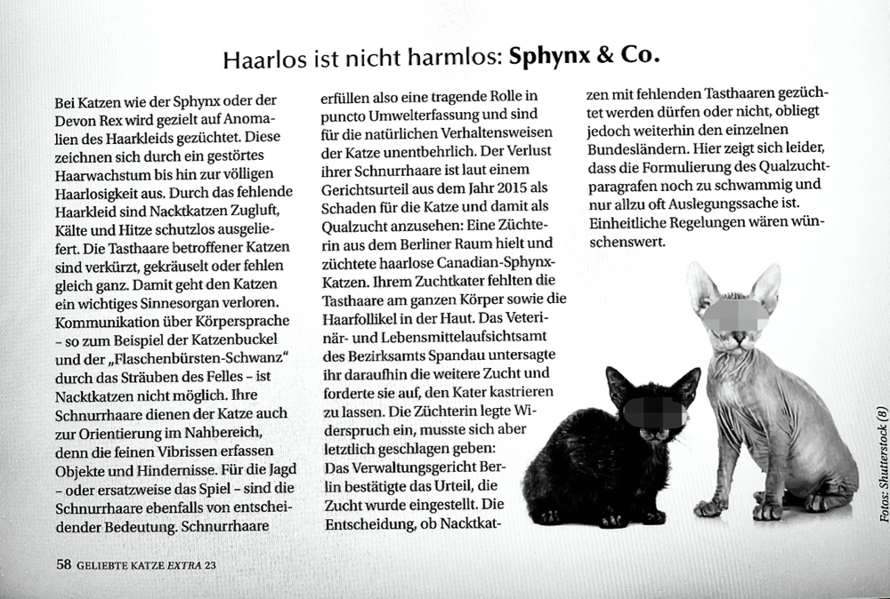 Screenshot Geliebte Katze Extra, Nr.23, April 2021