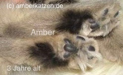 (Black) Amber - non agouti