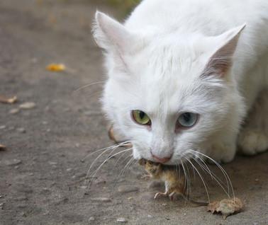 Katze und Maus, Bildquelle: © yanikap - Fotolia.com