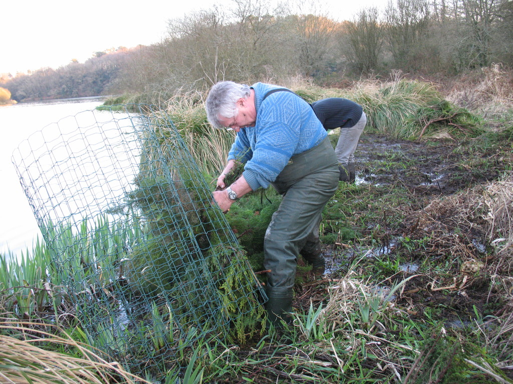Mise en oeuvre d'un support de ponte pour brochets ou poissons blancs à l'aide d'un grillage métallique garni de branches de résineux