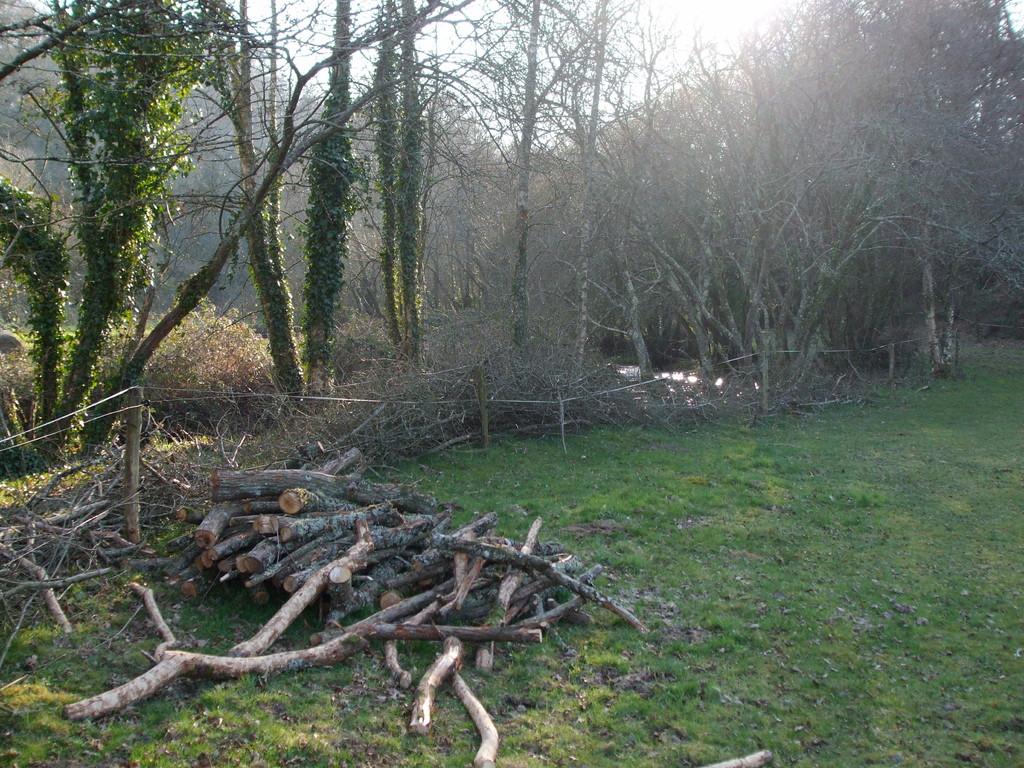 Mise à disposition des branchages et du bois de chauffe au propriétaire des lieux