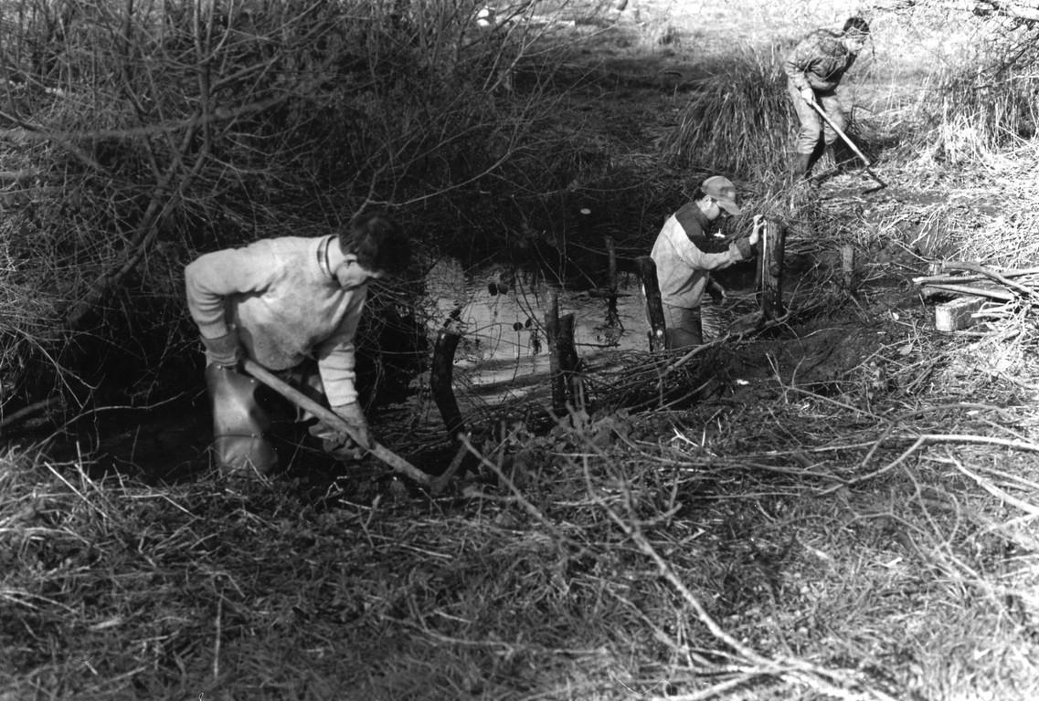 Fascinage des berges à l'aide de branches de saule