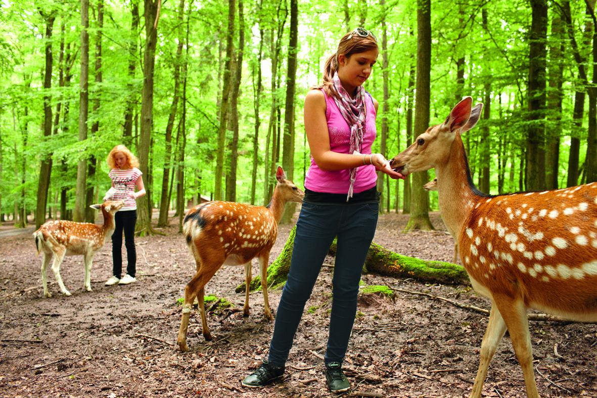 Im Wildparadies leben rund 50 Tierarten von A wie Auerochse bis Z wie Zwergziege