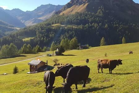 Unsere Herde in Prà San Peider