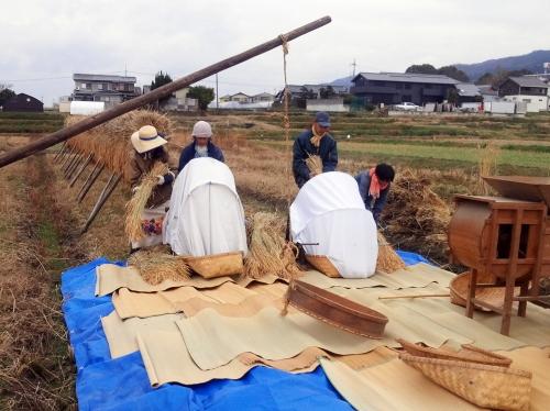 脱穀の様子(2018/12/17、photo by 自然農・いのちのことわり)