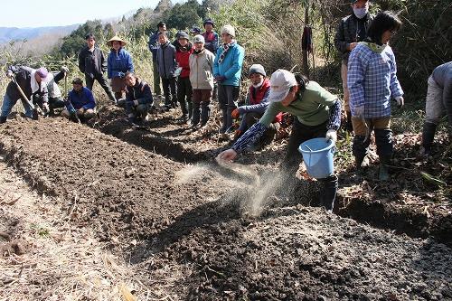 整えた畝の上に、米ぬかと油粕を振り撒く
