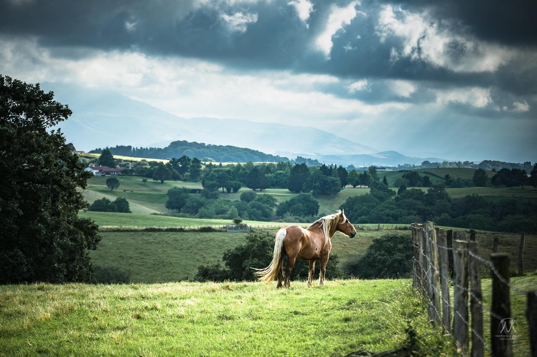 © Mathieu Prat photographe mariage - entreprise à Bayonne au Pays Basque (64100)