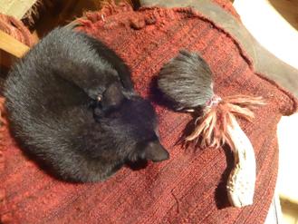Katze schläft zusammengerollt neben schamanischer Rassel