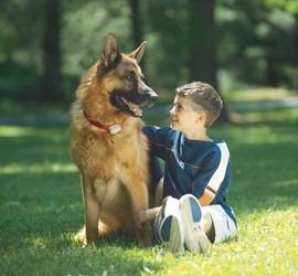 Richmond VA dog fencing systems