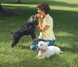 pets are happier with GentleSteps™ low-stress dog fence training