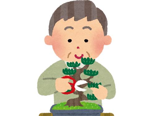 おじいちゃんの盆栽