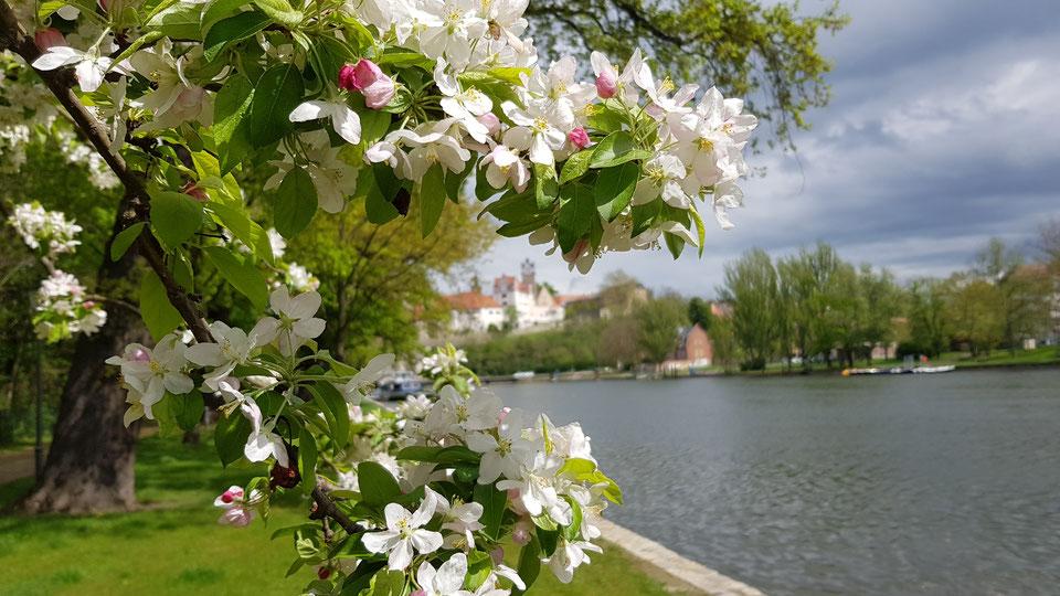 Frühlingshafte Temperaturen am Sonntag