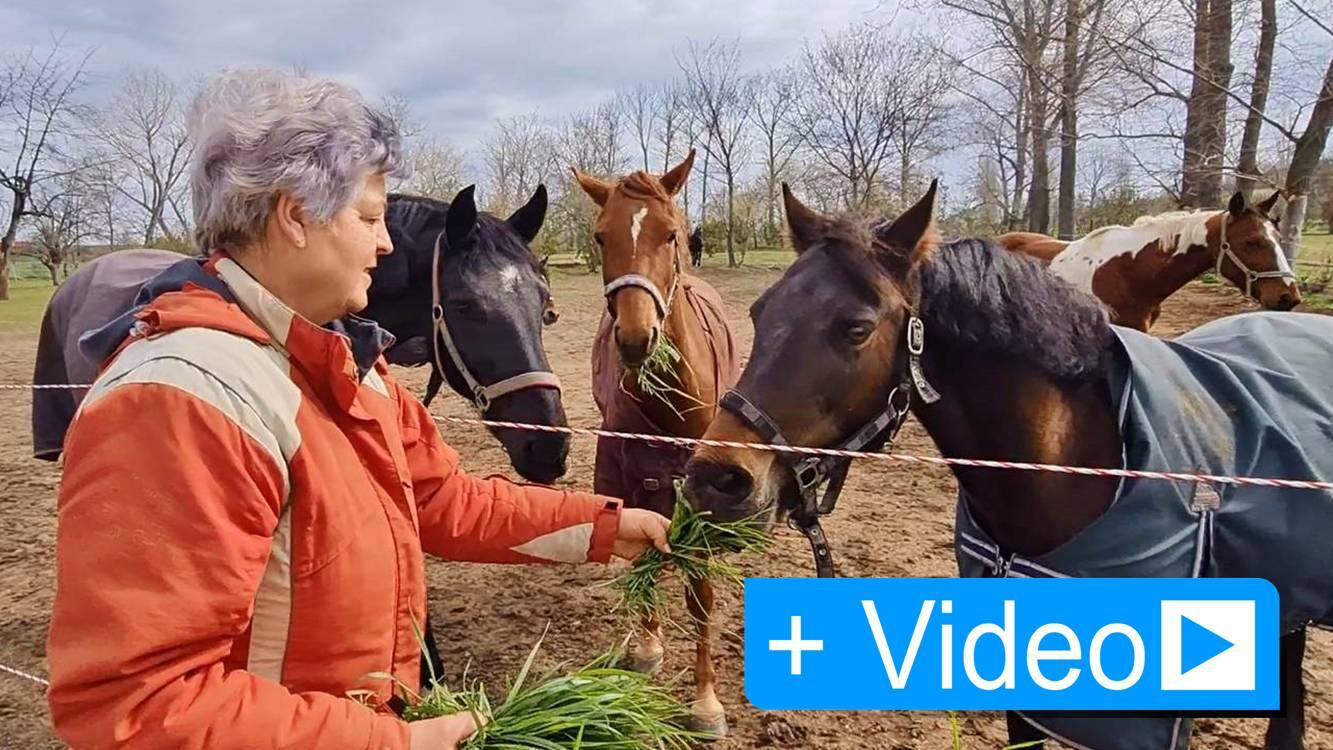 Reitverein Poplitz sucht Unterstützung für krankes Pferd