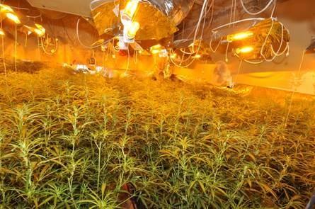 Professionelle Indoor-Plantage durch Polizei gesichert