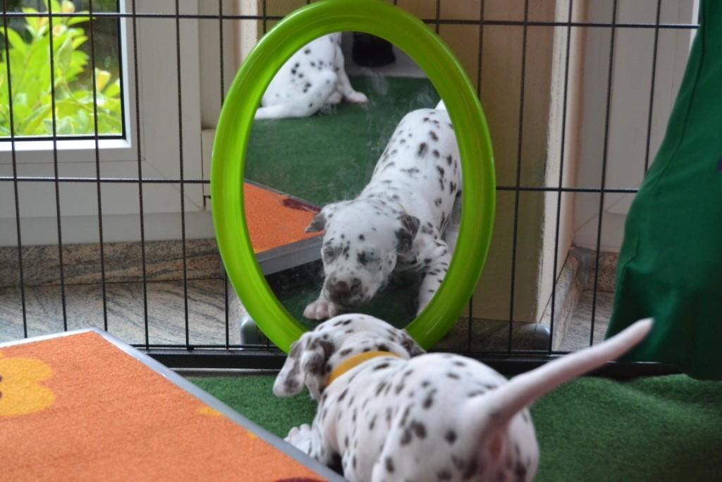Aida sieht ihr Spiegelbild