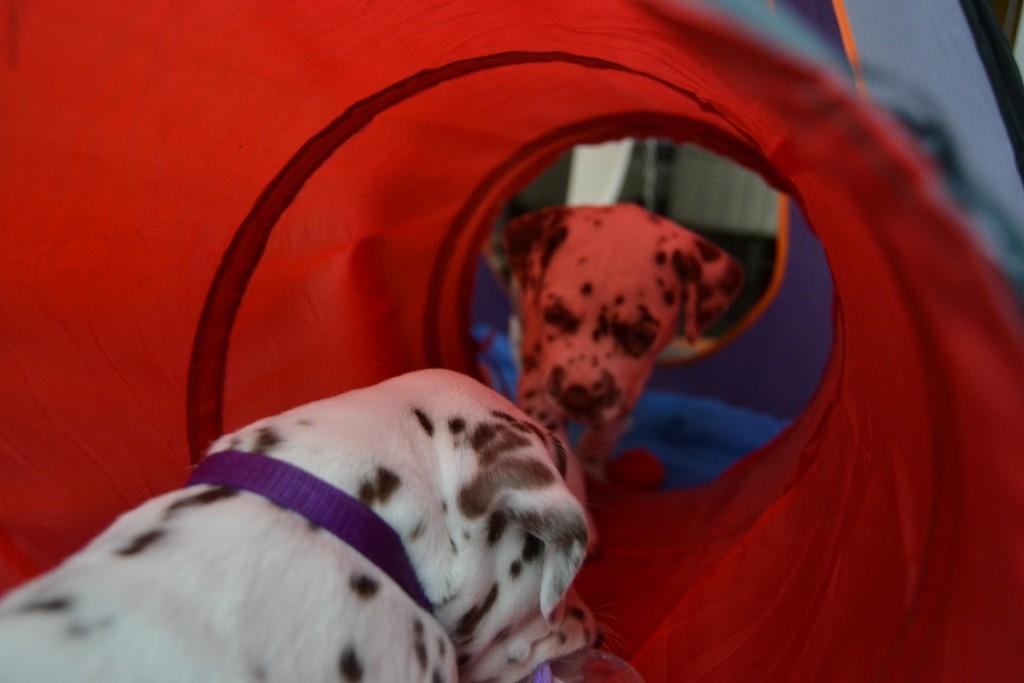 Allegra und Aida spielen im Tunnel