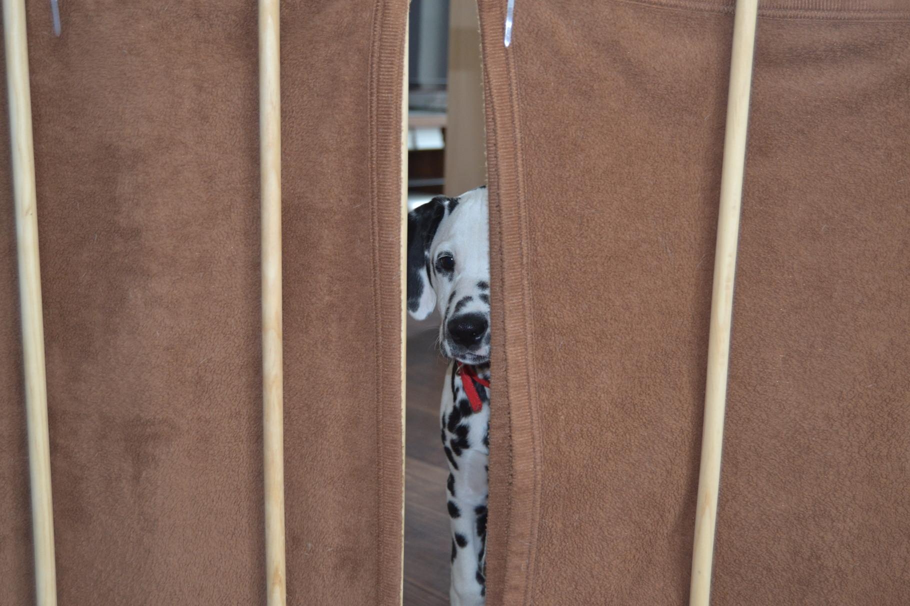 Ella beobachtet alles durch den Schlitz