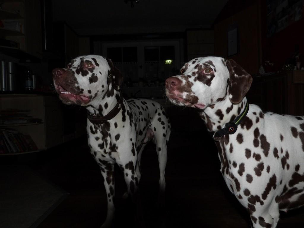 Roxas & Rosa
