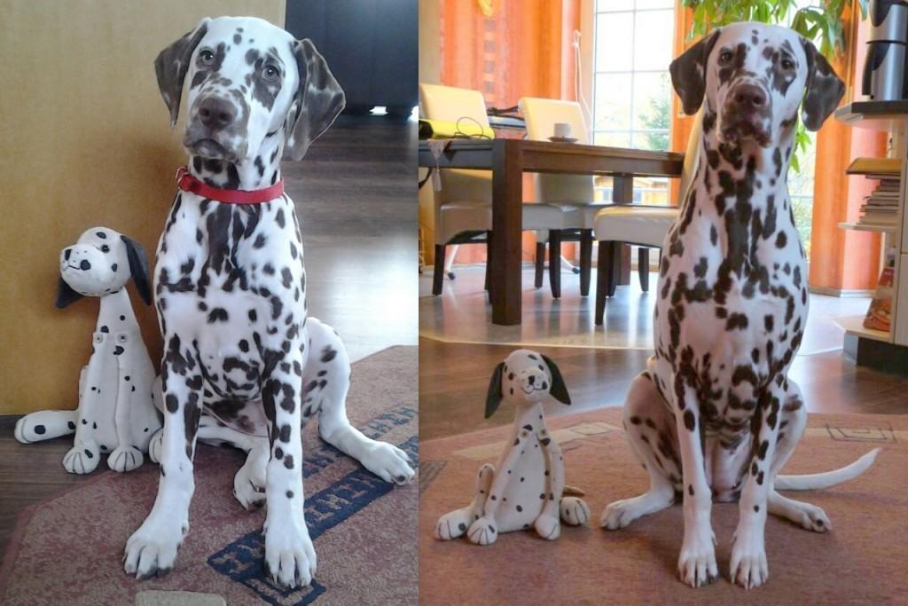 Rosa mit 3 und mit 11 Monaten