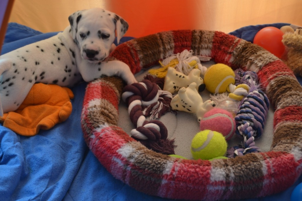 Amore Mio hat ganz viel Spielzeug für sich