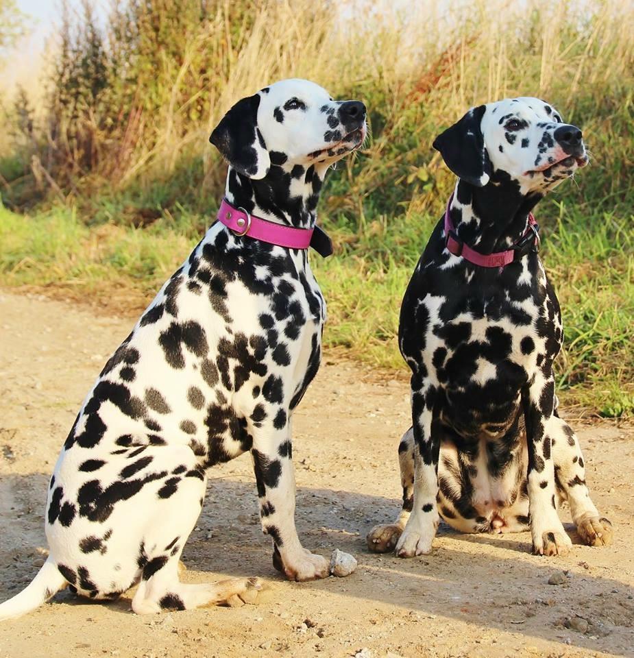 Ella und ihre Schwester Bailey