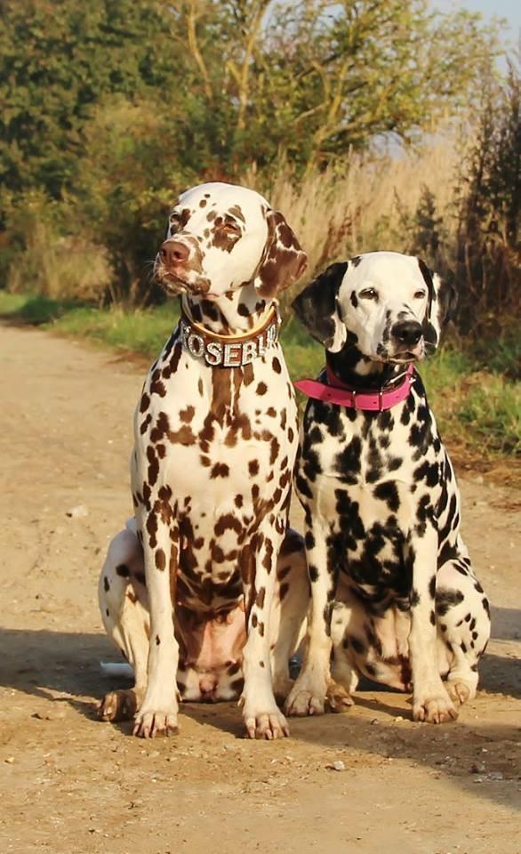 Rosa und Ella unser Dreamteam