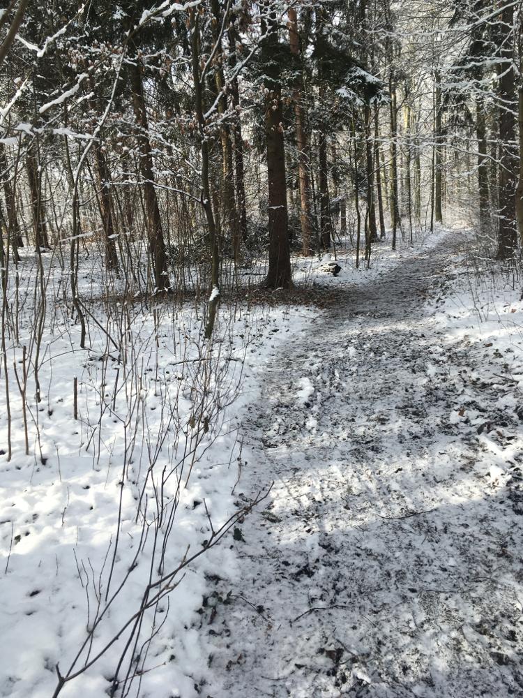 #Seminar #PflanzenundKräuter #Winter  #Weisserhirsch