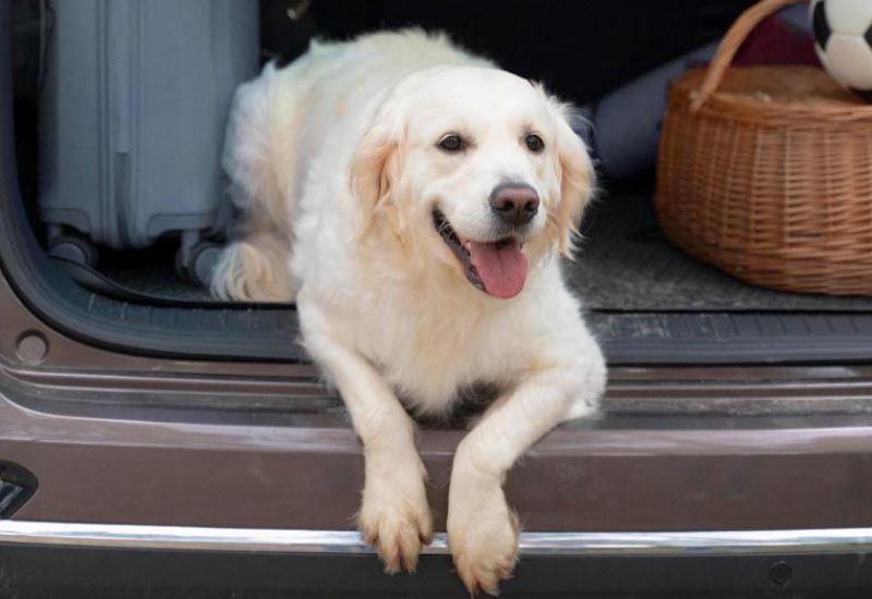 """Испания - новый """"закон о собаках"""""""