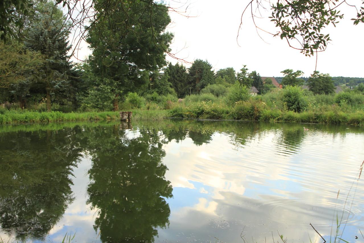 Naturteich für Teichfische