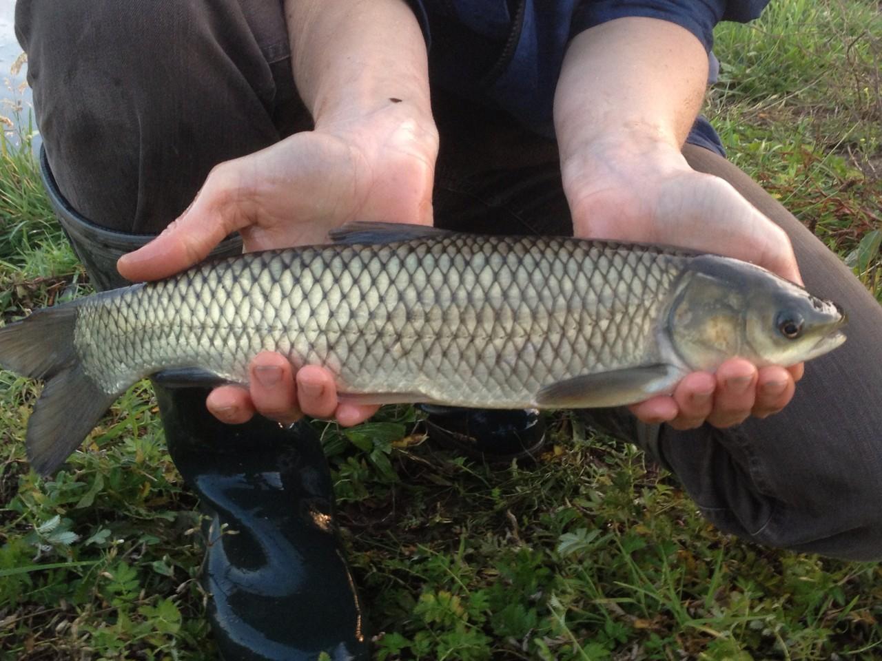 Fische fischzucht wetterfeld fisch und forschungszentrum for Jungfische im teich
