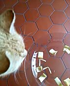 Katze zieht Lose