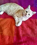 Katze auf pinkfarbener Decke