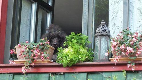 Saphira ist neugierig