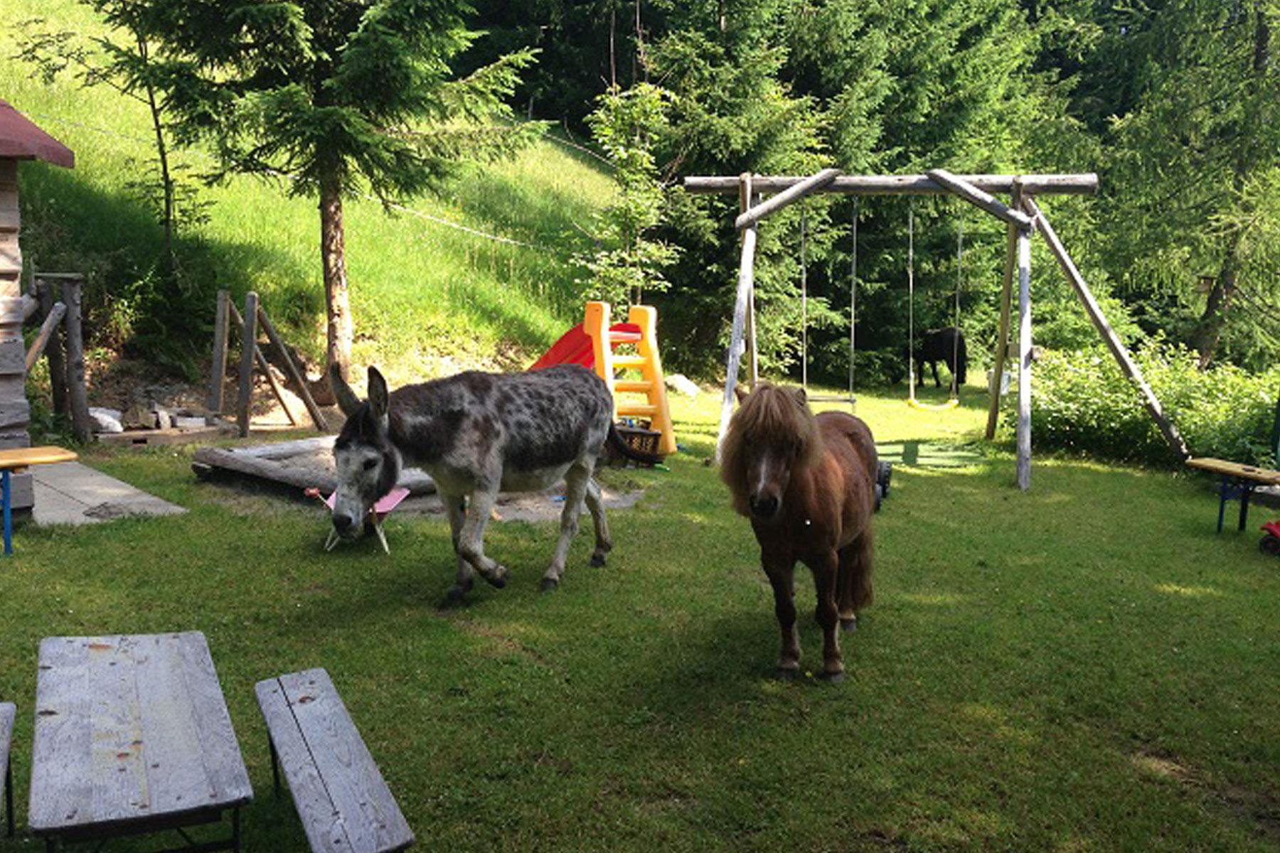 Berggasthof Bühlalpe, Kleinwalsertal – Kinder & Tiere sind herzlich willkommen!