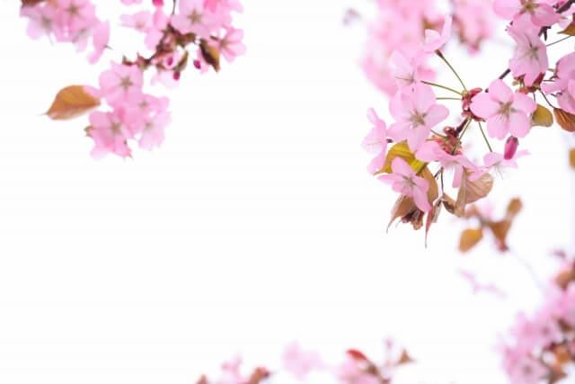 菜の花のハート