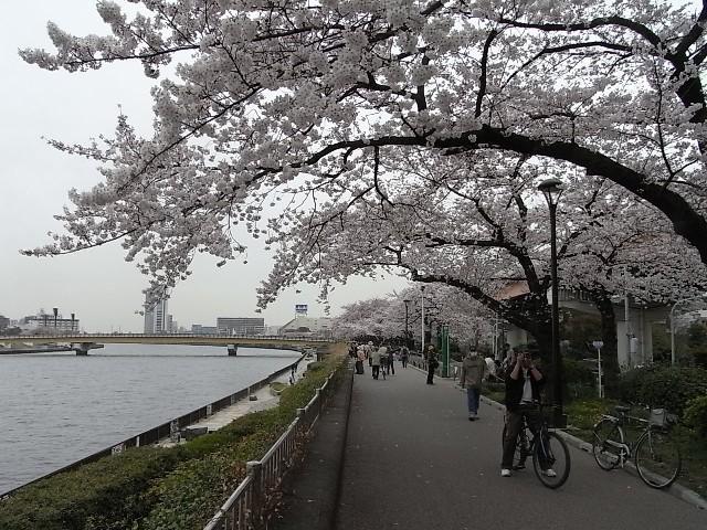 桜橋(歩行専用)