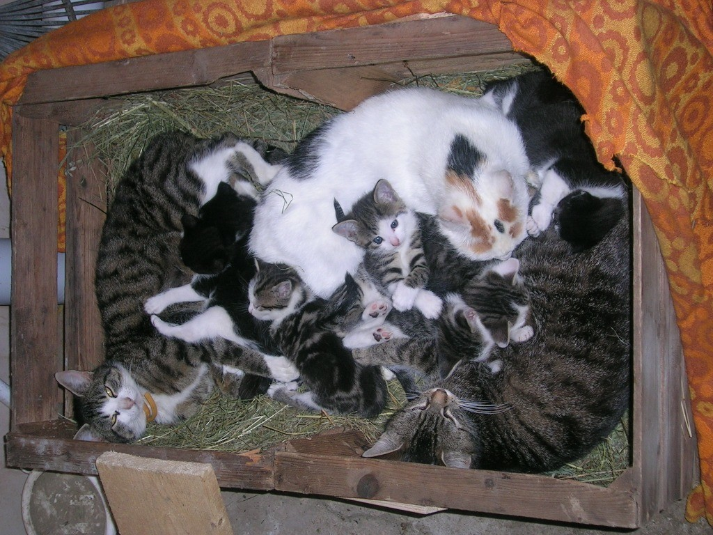 im Frühjahr bekommen wir immer Junge Katzen