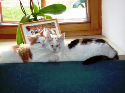 Katzen beim kuscheln