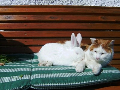 Katze und der Hase sitzen auf unserer Hausbank