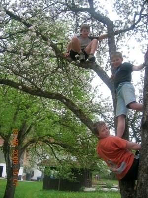 die Jungs klettern auf die Bäume