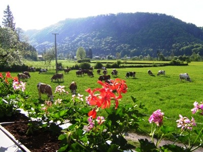 die Kühe sind auf der Weide