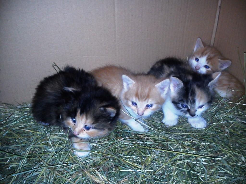 unsere Jungen Katzen
