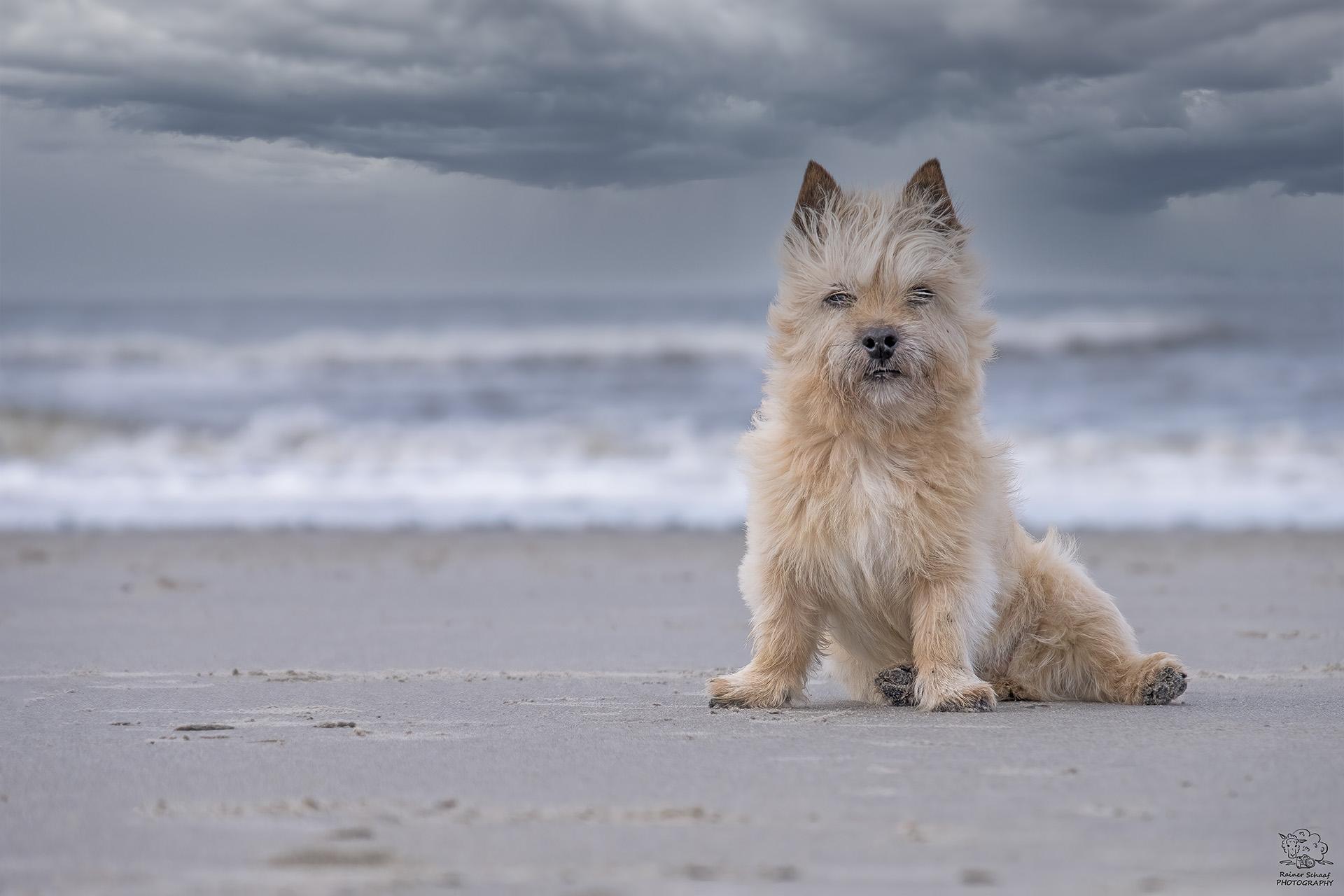 """""""Kampfhündchen"""" Luna bewacht die Nordsee ..."""