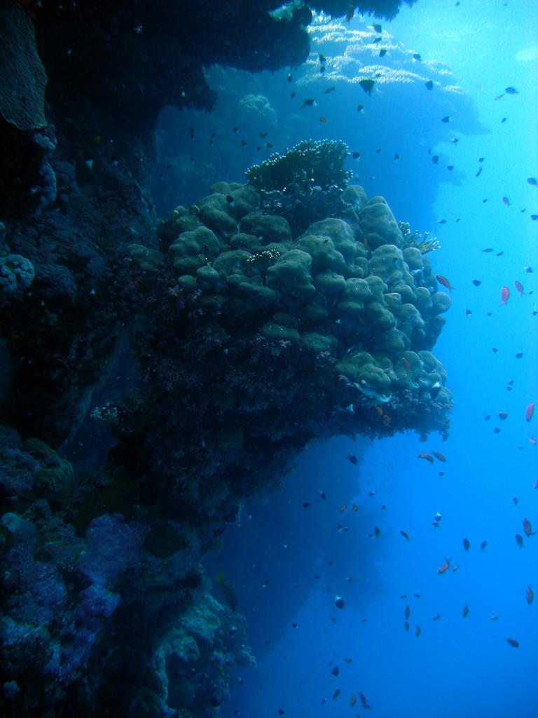mer Rouge Egypte