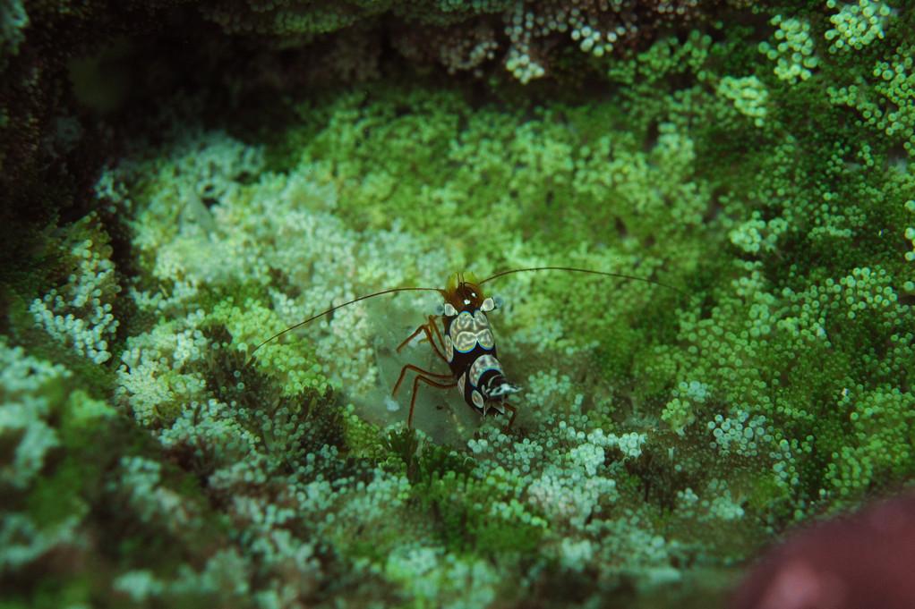 , Negros orientales, Philippines