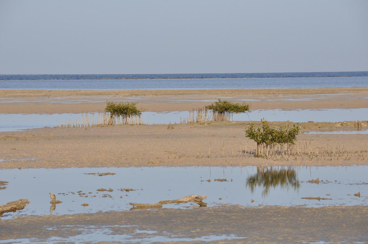 mangrove Wadi Lahami