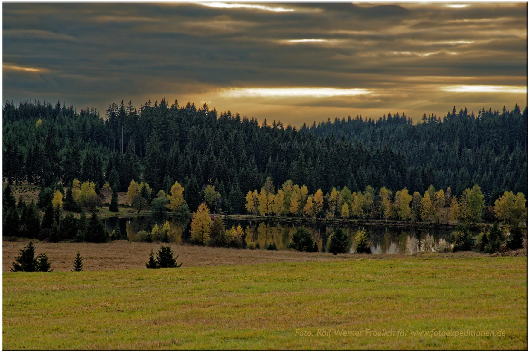 Erzgebirge, im Hochmoor