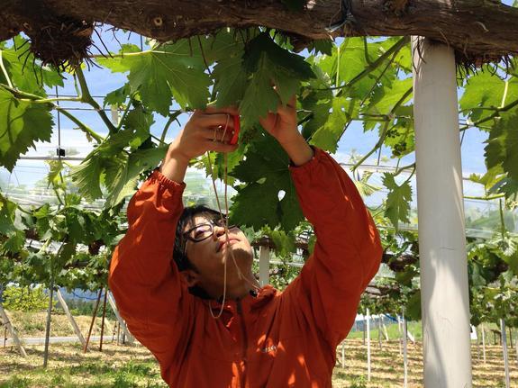 より人間らしい農的な暮らしを体験する